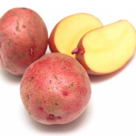Patata roja del país