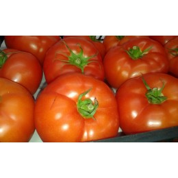 Tomate extasis 500 gr.