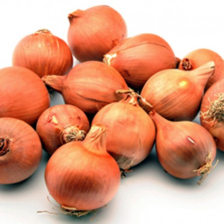 Cebolla Platillo
